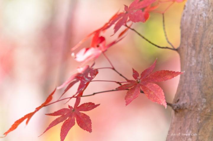 パステルな紅葉