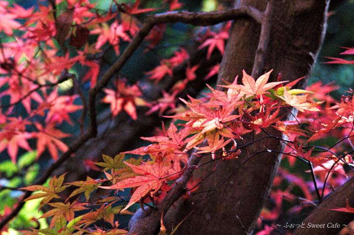 艷やかな紅葉