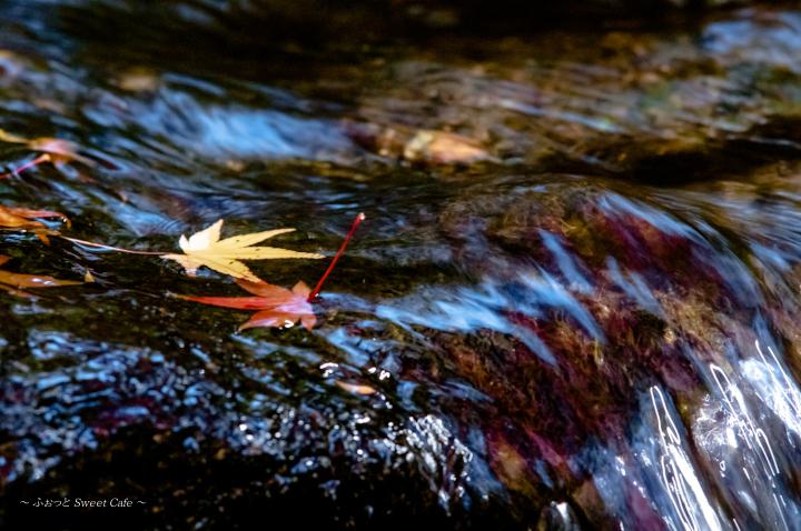 流れと紅葉