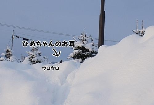 ゆきやま4