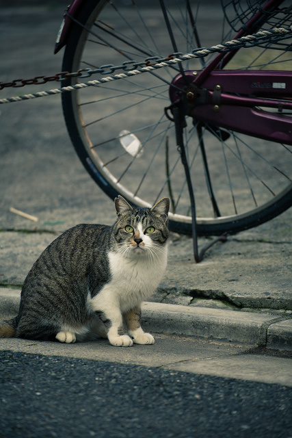 朝日町 裏通り 猫 撮影