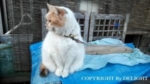 飲み屋の猫