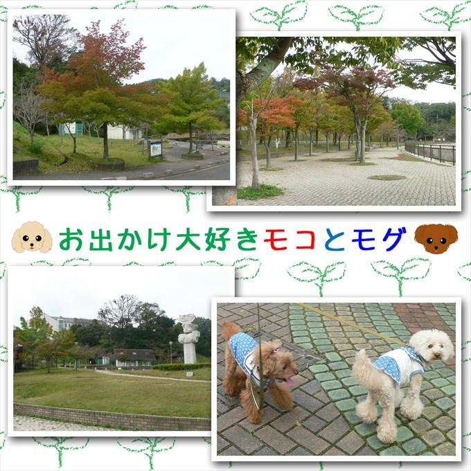 360_20171231141157e21.jpg