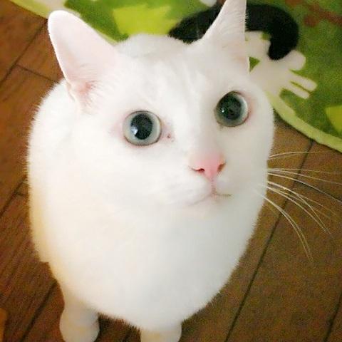 猫ちゃんママ15