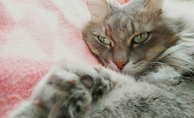 ごんちゃん毛フカフカのごんちゃんわ、自分専用ベッドにみんなを寝させてあげるにゃん