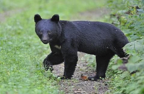 輪熊ツキの