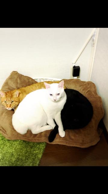 弟猫達の猫団子🍡