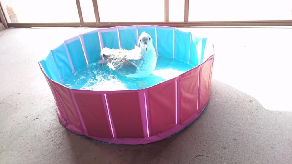 水浴び気持ちいいよ(*^_^*)一緒にどう?