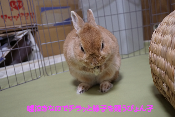 ぴょん子180119_03