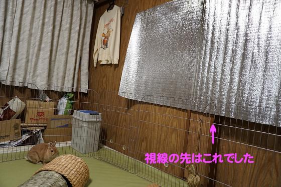ぴょん子180119_04