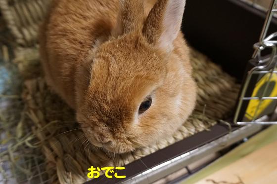 ぴょん子180215_04
