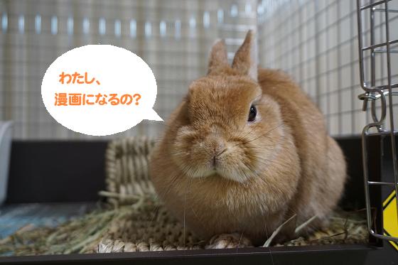 ぴょん子180221_00