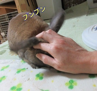 azuki20180129-5.jpg