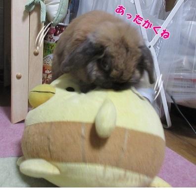azuki20180206.jpg