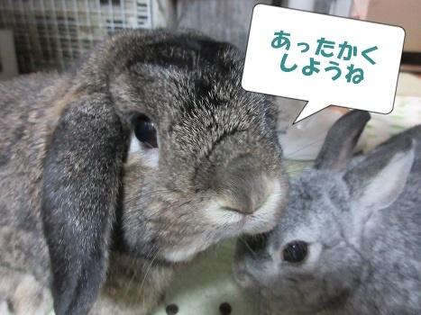 koguchi2.jpg