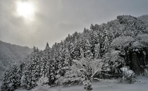 1274大雪181112