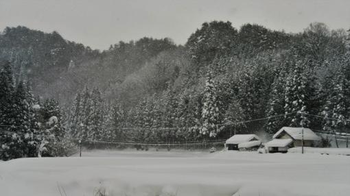 1313大雪181116