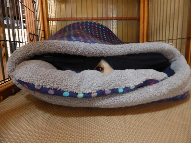 ゆめベッド
