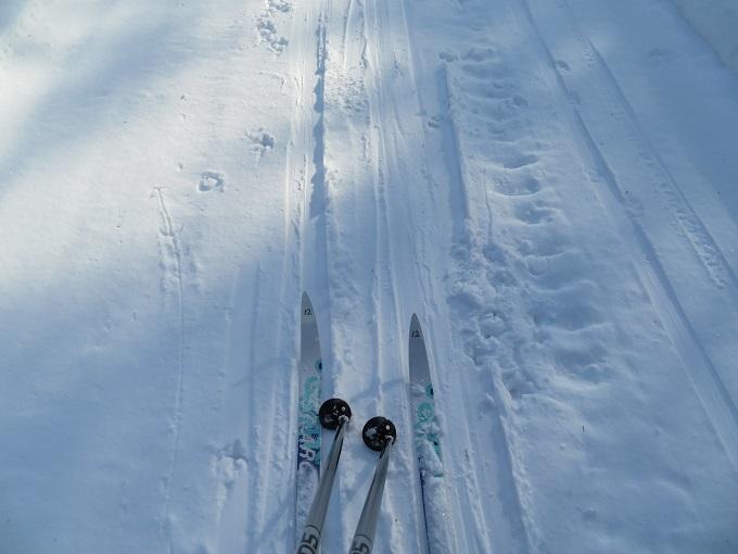 歩くスキー (2)