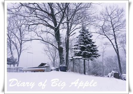 裏庭も雪景色