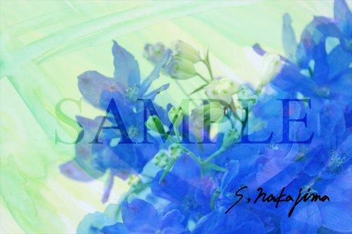 flower010b.jpg