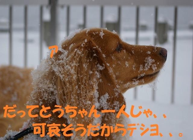 IMGP117031_R.jpg