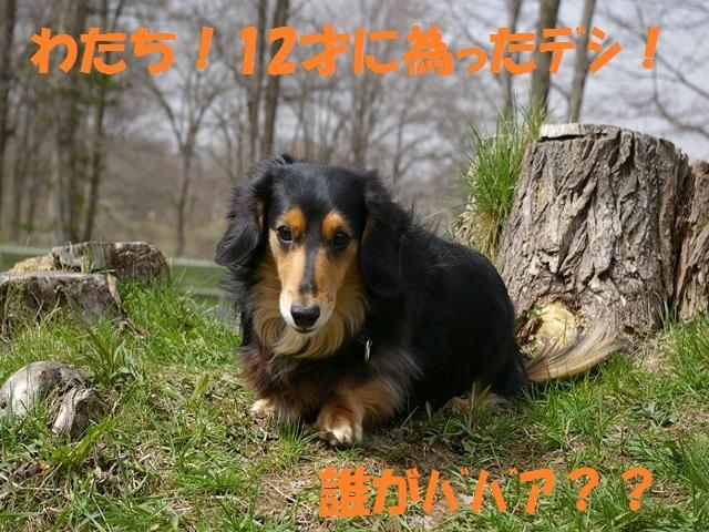 IMGP2121654_PP.jpg