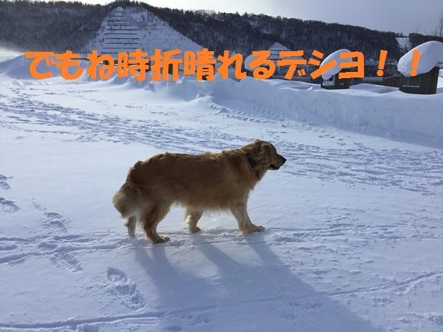 IMG_0089_PP.jpg