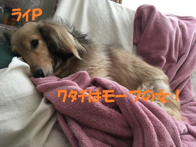 IMG_8111_PP.jpg
