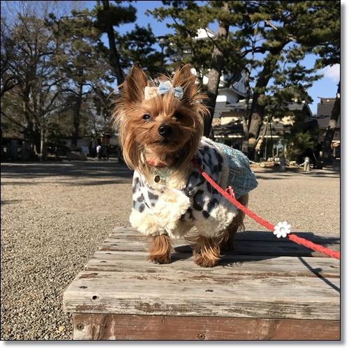 岡崎城と蓬莱橋IMG_3662-20180114