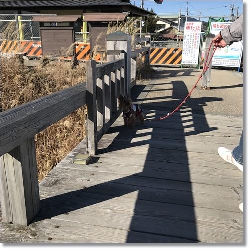 岡崎城と蓬莱橋IMG_3679-20180114