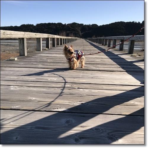 岡崎城と蓬莱橋IMG_3684-20180114