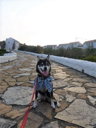 志摩地中海村お散歩35