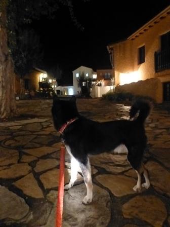 志摩地中海村夜のお散歩 (6)