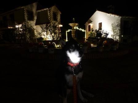志摩地中海村夜のお散歩 (13)