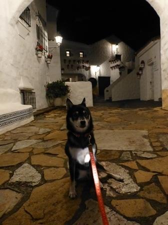 志摩地中海村夜のお散歩 (22)