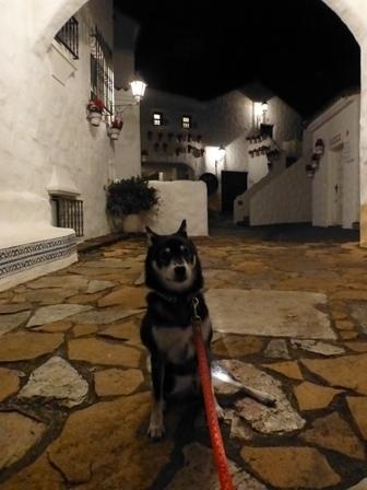 志摩地中海村夜のお散歩 (24)
