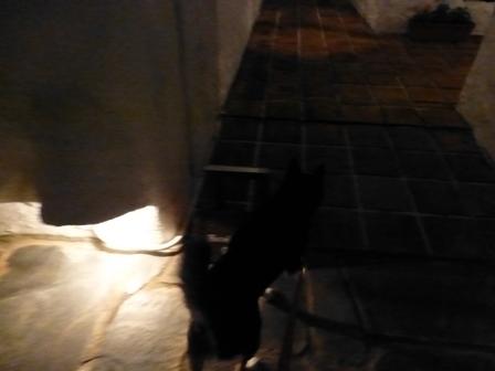 志摩地中海村夜のお散歩 (28)