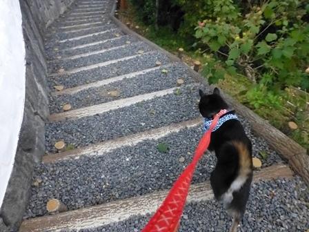 志摩地中海村朝のお散歩15
