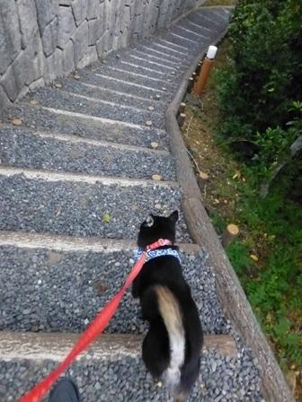 志摩地中海村朝のお散歩16
