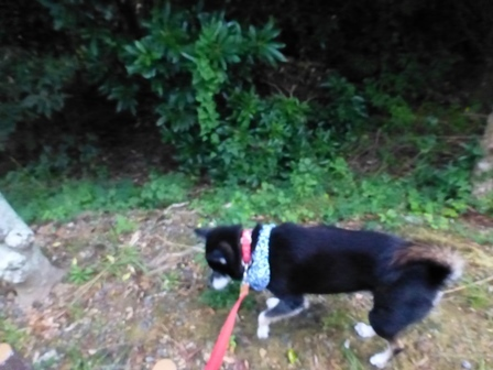 志摩地中海村朝のお散歩17