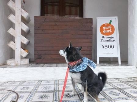 志摩地中海村朝のお散歩32