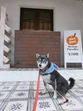 志摩地中海村朝のお散歩33