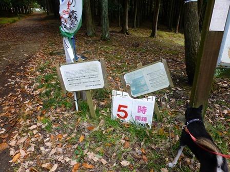 みのお記念の森 (12)