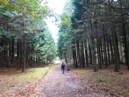 みのお記念の森 (14)