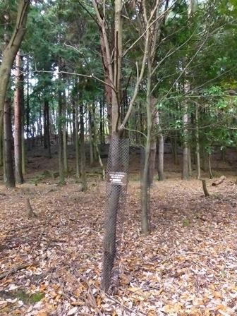 みのお記念の森 (15)