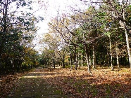 みのお記念の森 (45)