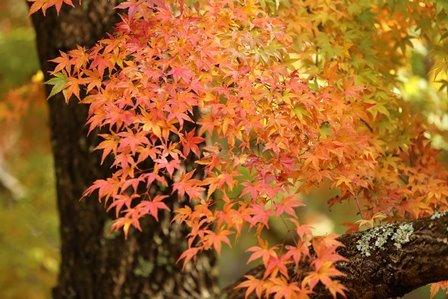 みのお記念の森 (49)