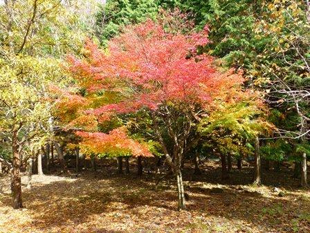 みのお記念の森 (50)