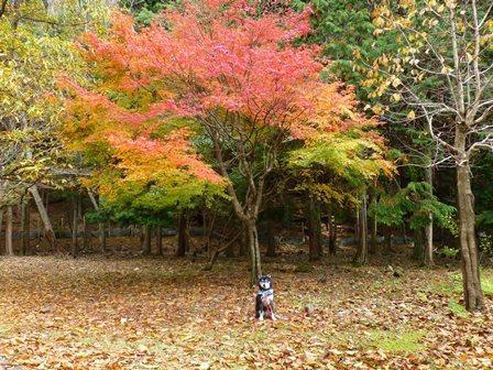みのお記念の森 (51)